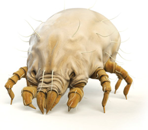Click Here For More Information On Dust Mites & Encasings